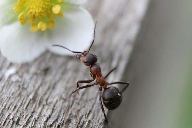 Les fourmis sont beaucoup plus actives au printemps