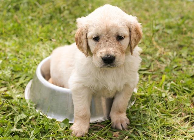 Comment choisir la bonne race de chien?