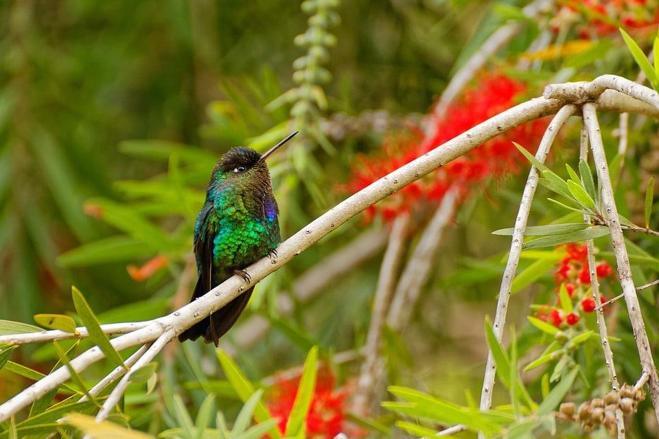 Partir au Costa Rica pour découvrir la réserve biologique de Monteverde
