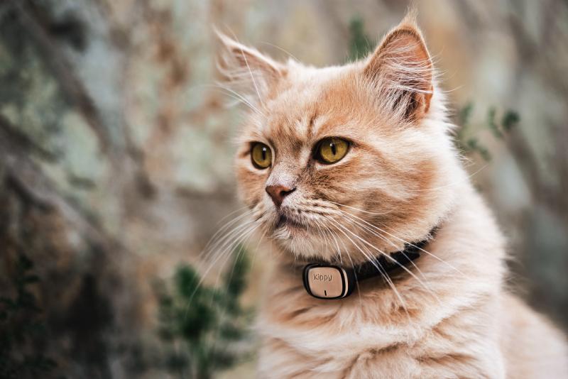 6 conseils pour avoir un chat en super forme !