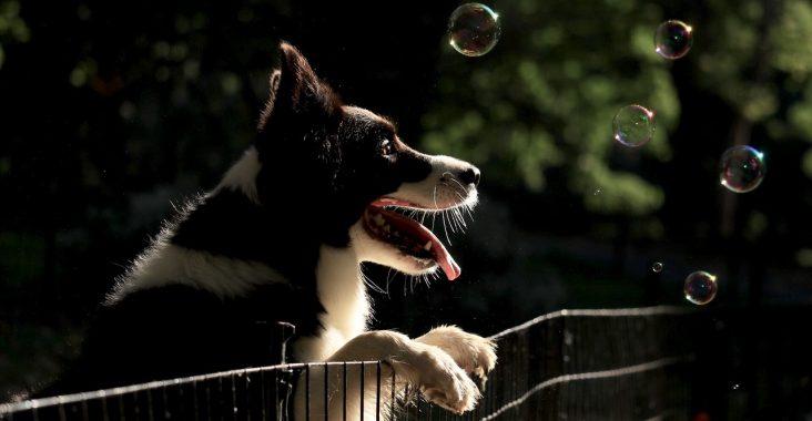 Comment empêcher son chien de fuguer ?