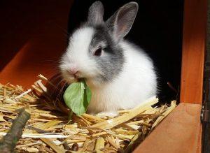 Élever un lapin en appartement : quels sont les prérequis?