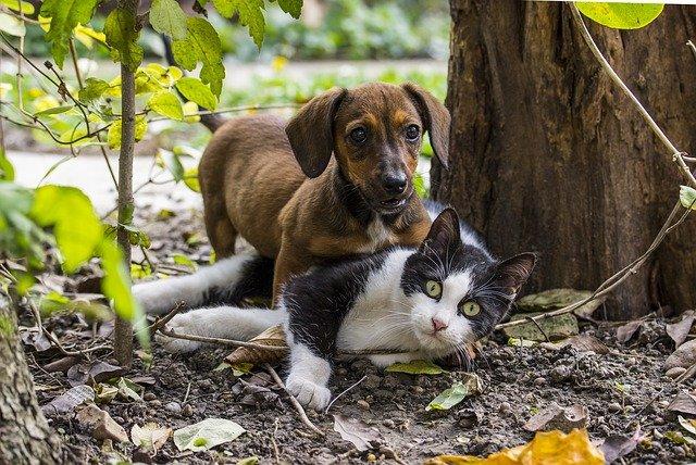 couleurs vues par chiens et chats