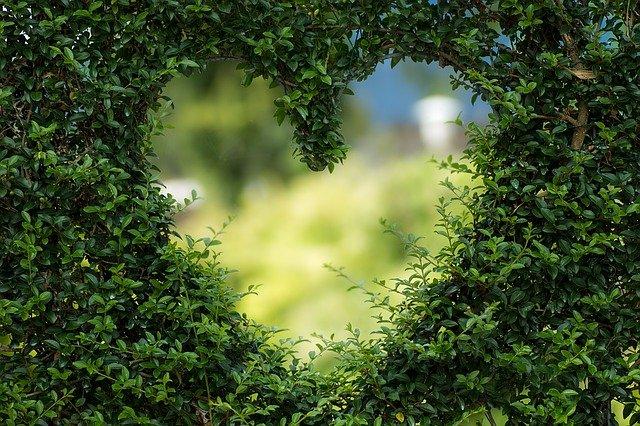 Redecouvrez la nature qui vous entoure
